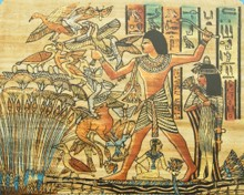 papyrus_image